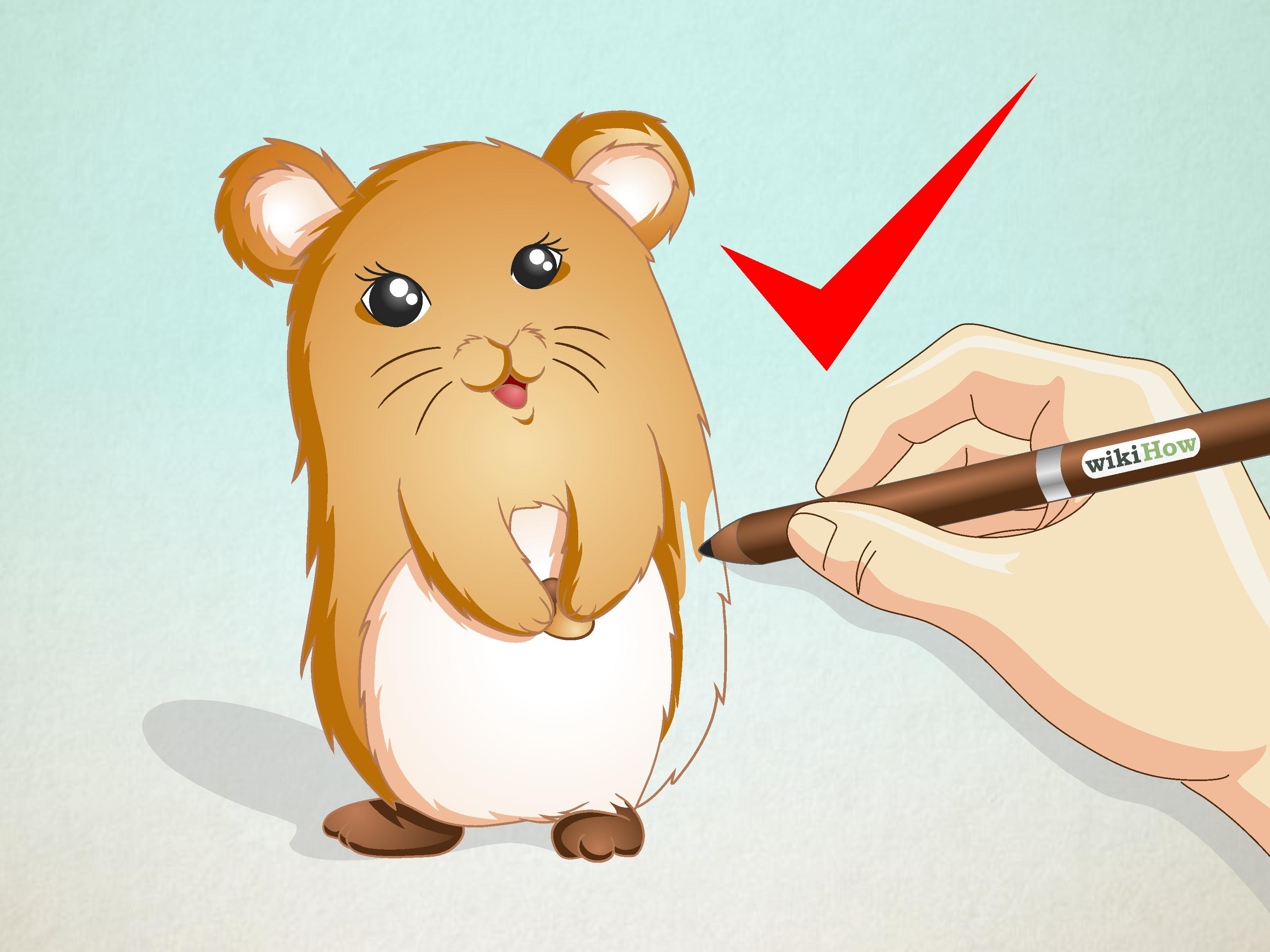 3200x2400 How To Draw A Hamster 15 Steps (With Pictures)