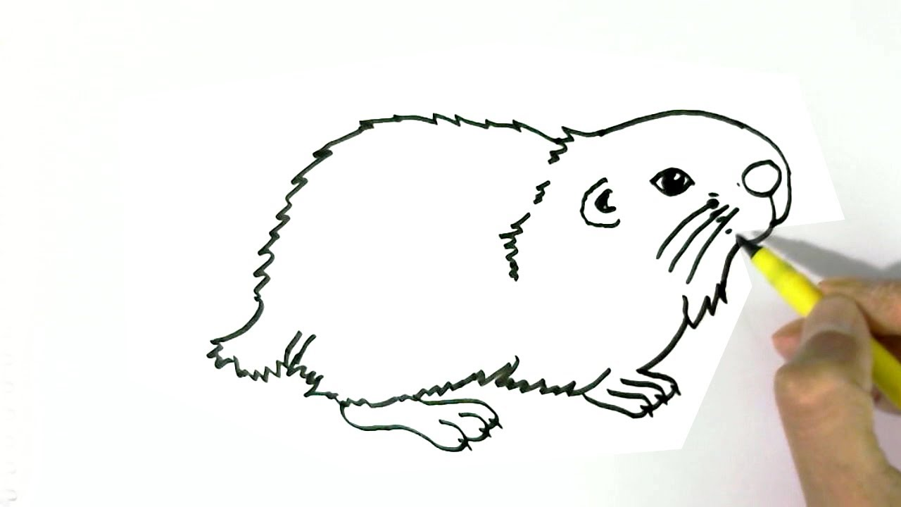 1280x720 How To Draw A Hamster 2 Easy Steps For Children, Kids, Beginners