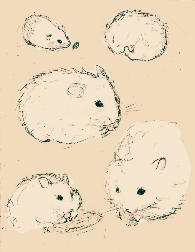 662x855 Some Doodles Of Hamsters By 0xo