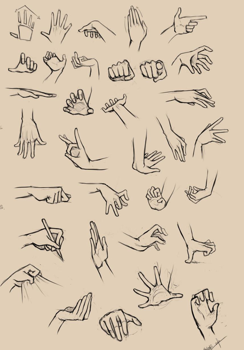 856x1226 4 Hand Anatomy Drawing Image