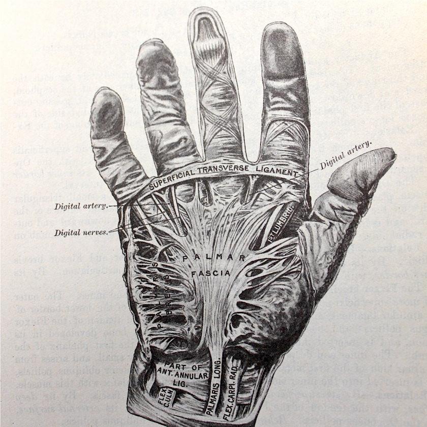 840x840 S.a.l.e. 30% Off Vintage Anatomical Drawing Medical Illustration