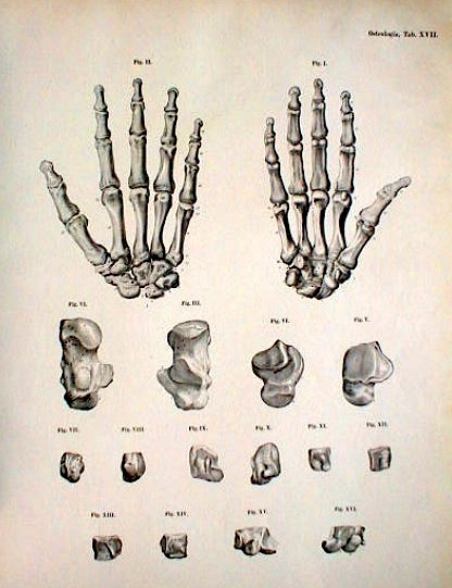 416x541 16 Best Hands Bones Images On Drawings, Bones