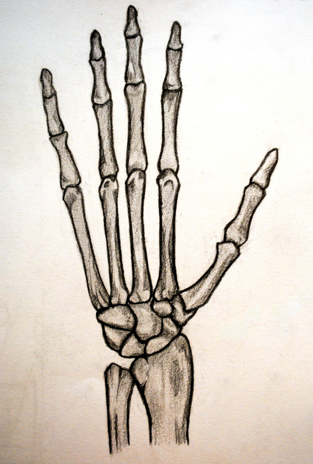 1024x1517 Skeleton Hands Drawing Drawn Skeleton Hand Tumblr