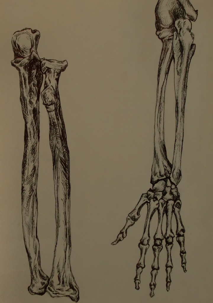 720x1024 All Sizes Arm And Hand Bones