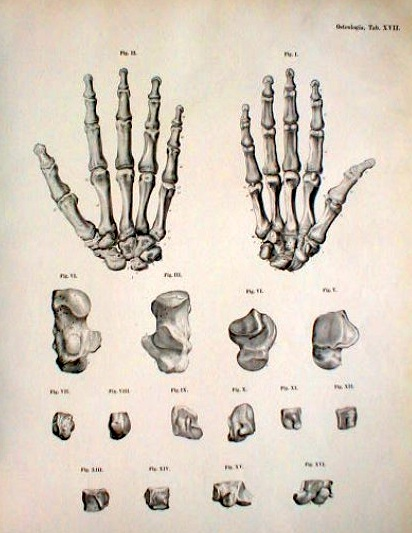 412x533 Pin By Junior Ioane On Bones Hand Bone, Hand Anatomy