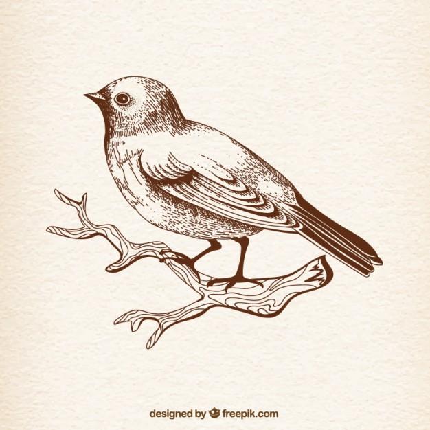 626x626 Hand Drawn Bird Vector Free Download