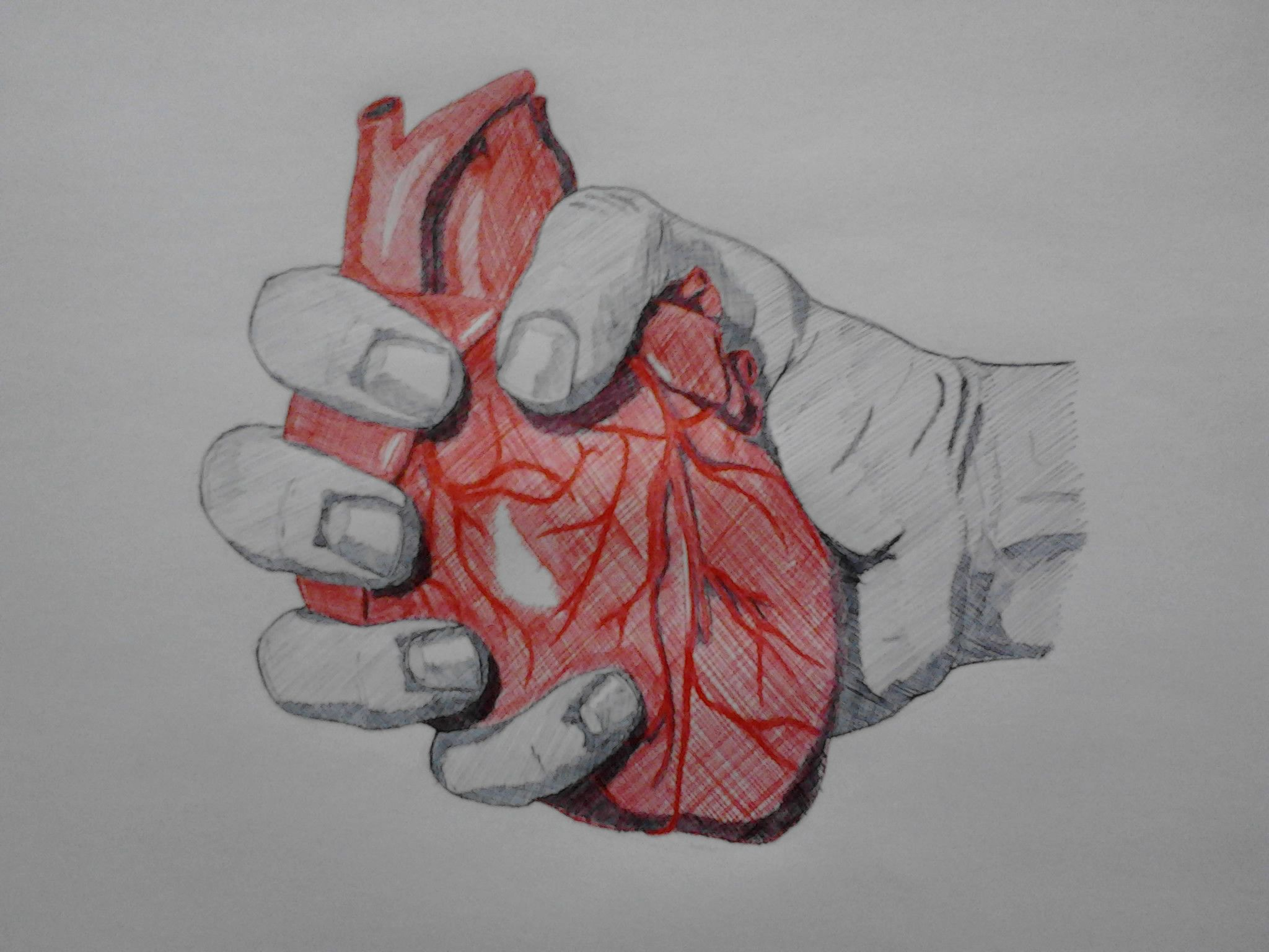2048x1536 Images Of A Human Hand Sketch