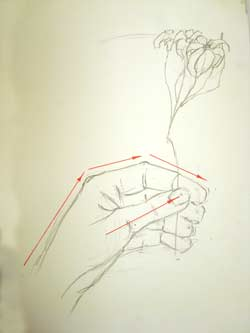 250x333 Hand And Flowers. Observational Drawing. Art Lesson.