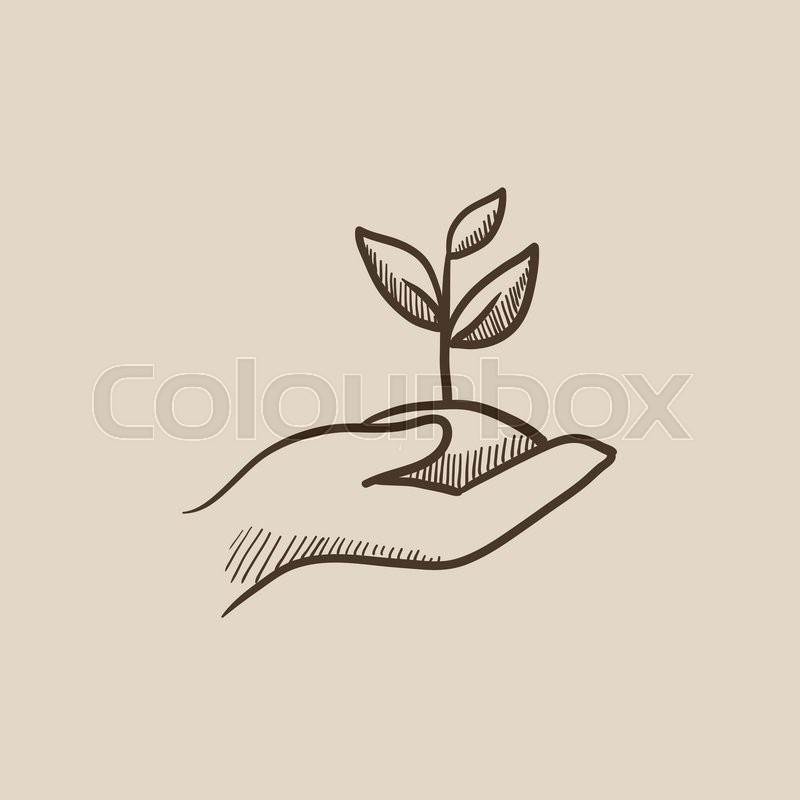 800x800 Hands Holding Seedling In Soil Sketch Icon For Web, Mobile