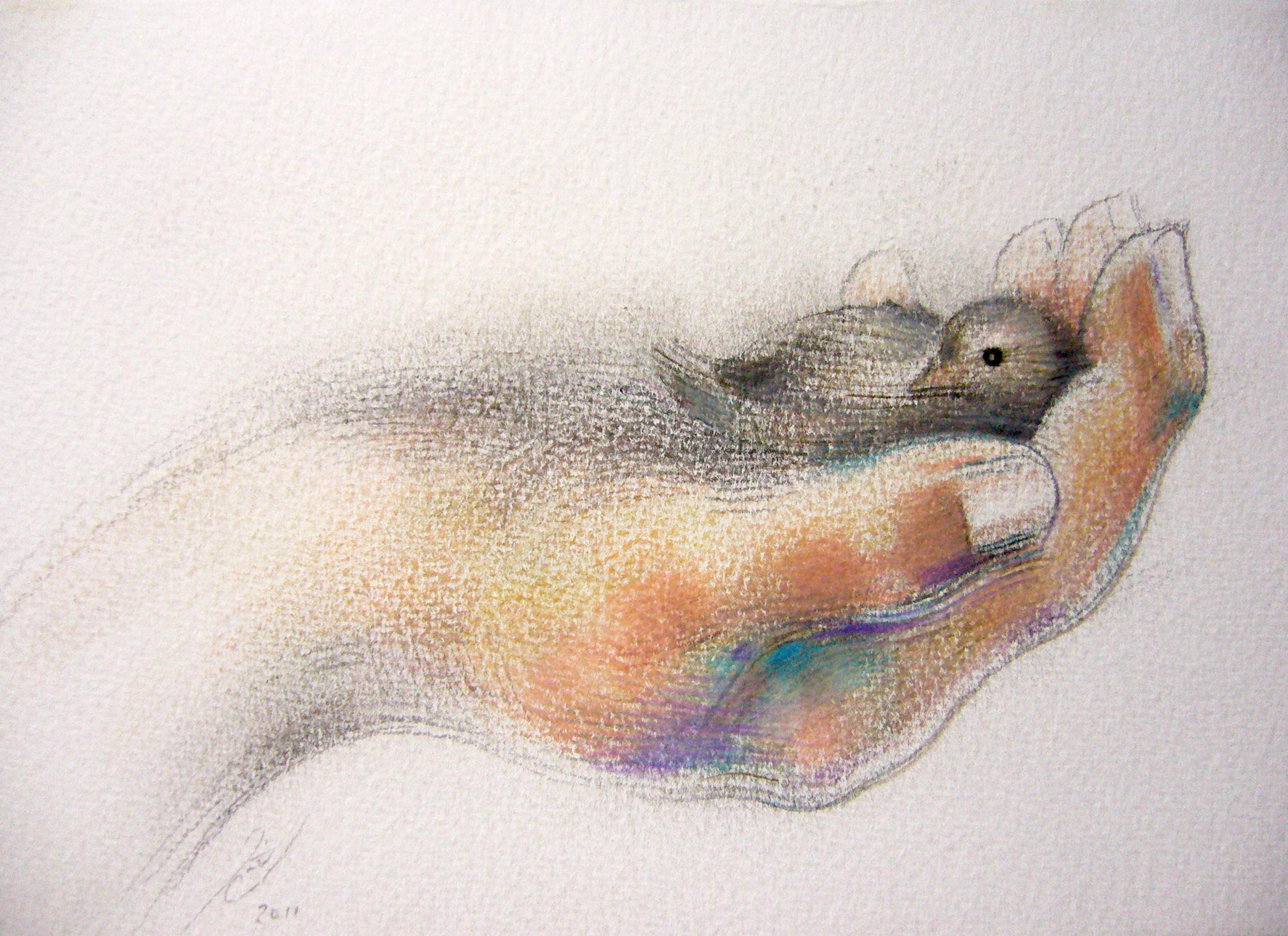1774x1289 Bird In The Hand (Drawing) Jaimie Cahlil Broadcanvasgallery