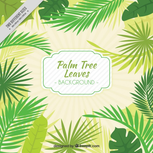 626x626 Hand Drawn Palm Tree Leaves Background Vector Free Download