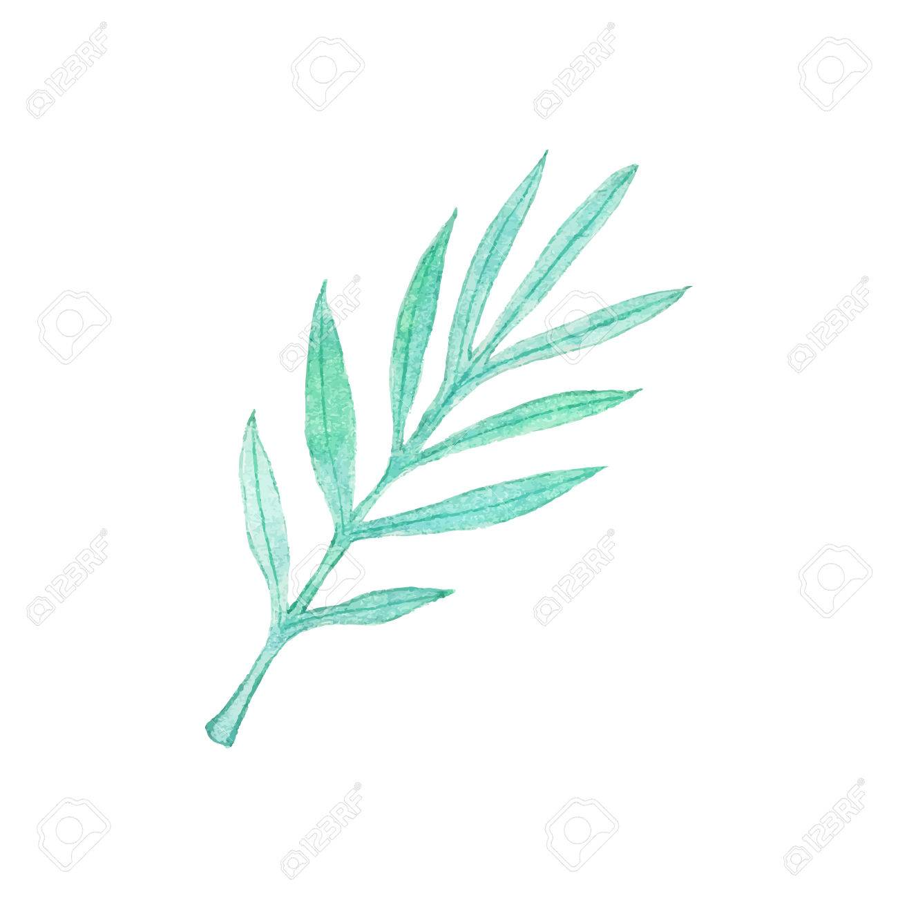 1300x1300 Palm Branch. Hand Drawn Leaves. Real Watercolor Drawing. Vector
