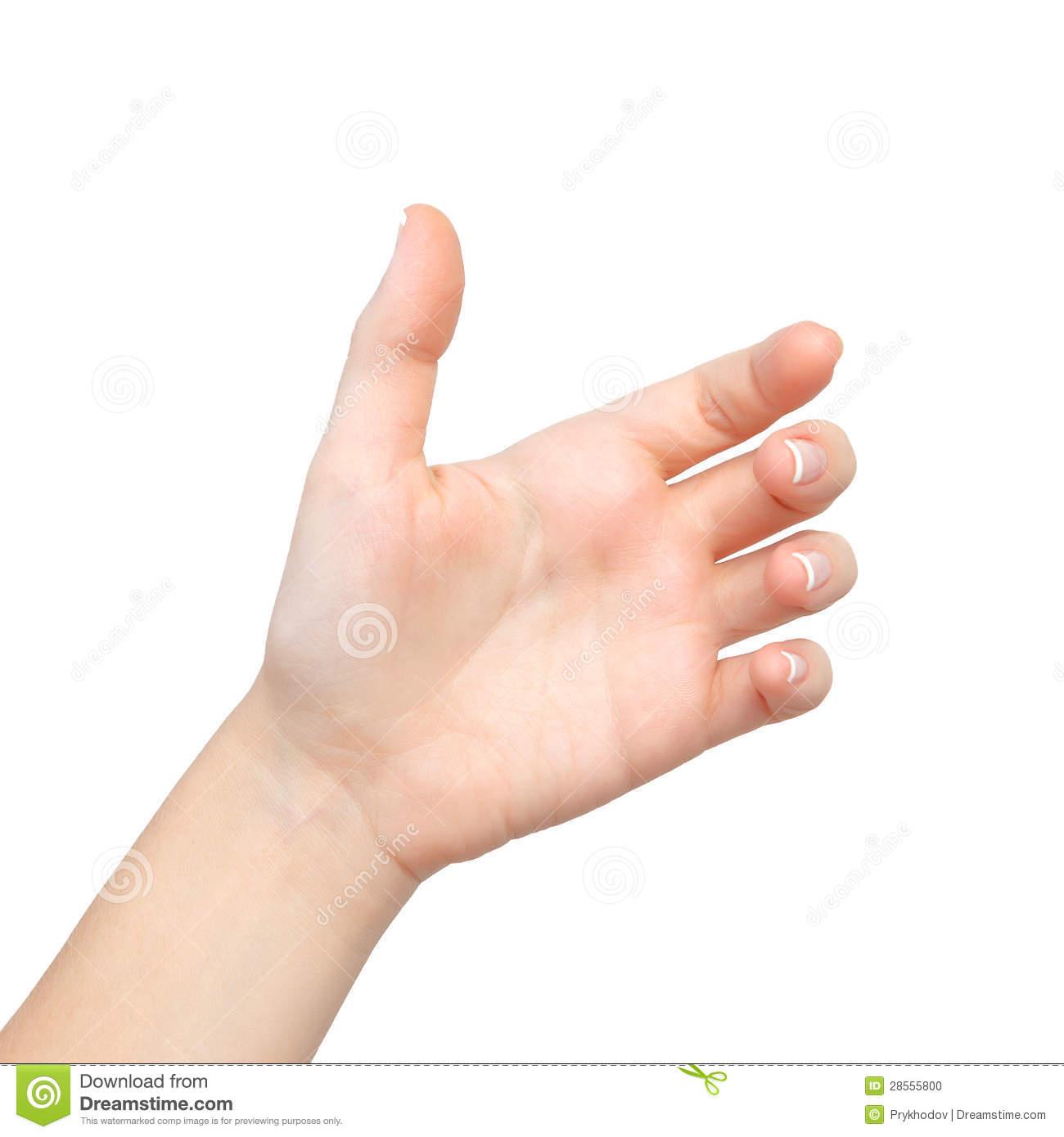 1300x1390 Female Palm Hand