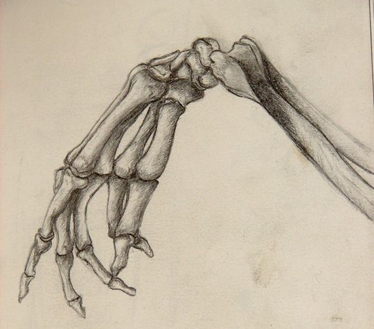 540x476 Skeleton Hand Study By Deiphorm On Drawing