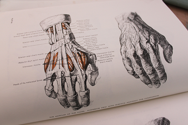 600x400 Human Anatomy Drawing Books How To Draw Lifelike Hands In 4 Steps