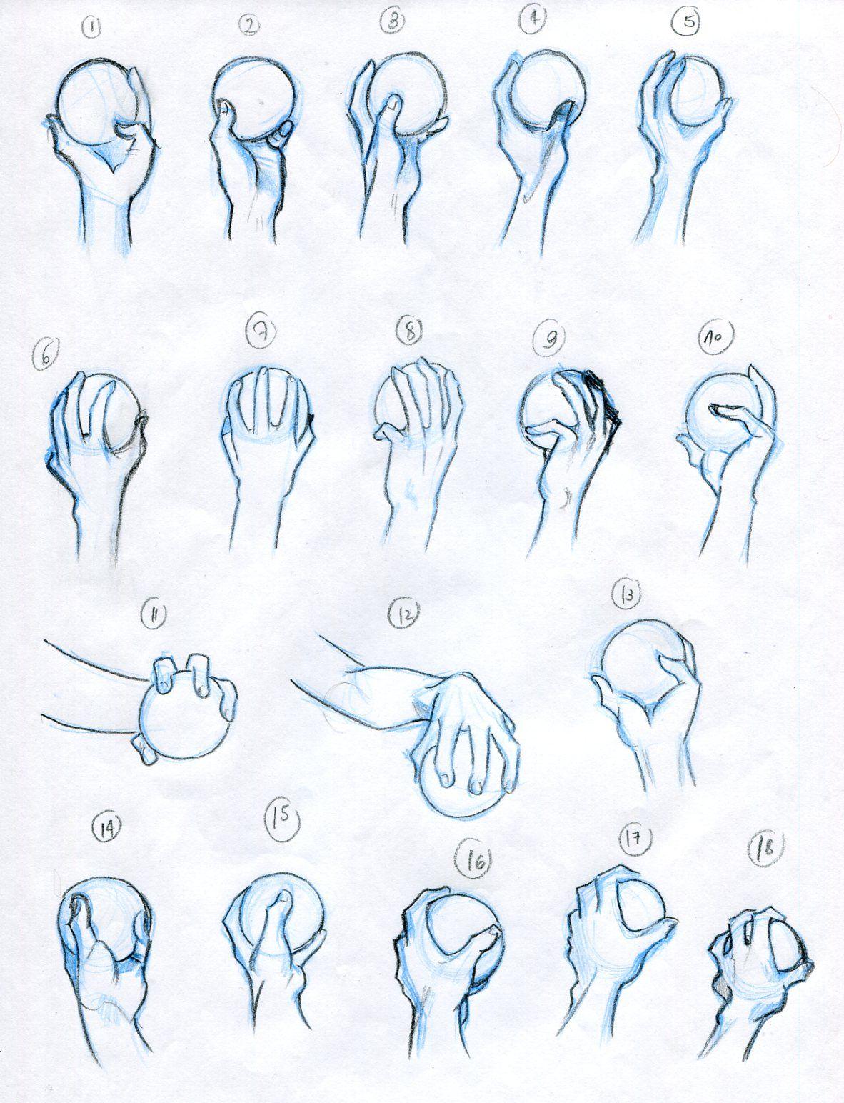 1182x1544 Anatomy