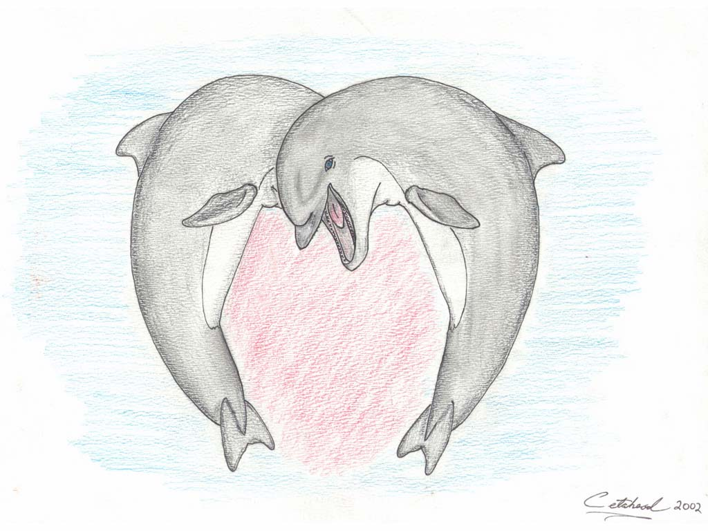 1024x768 Dolphin Sketches