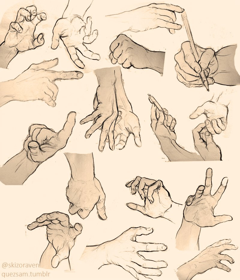 800x933 Pin By Cora Harris On Art Hands Hand Reference