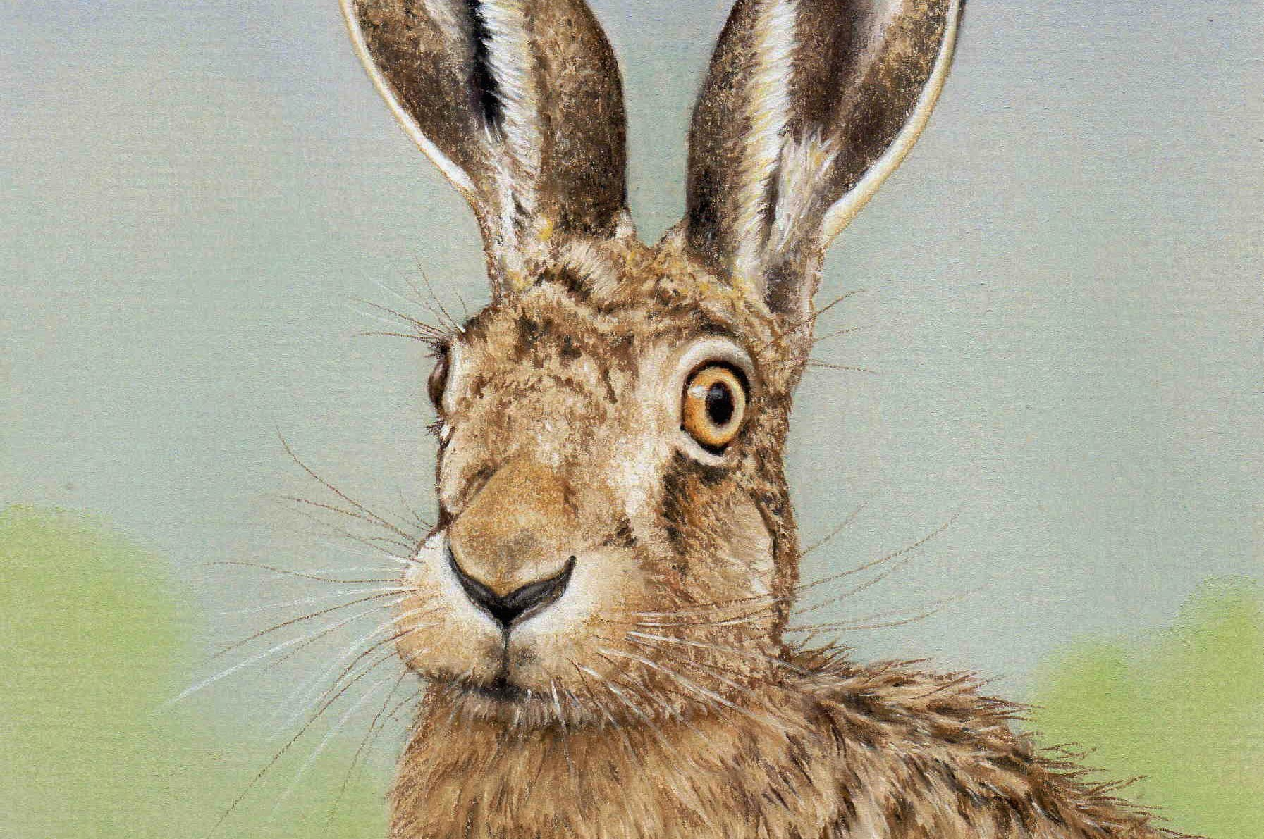 1793x1191 Drawing A Hare In Pastel Pencils