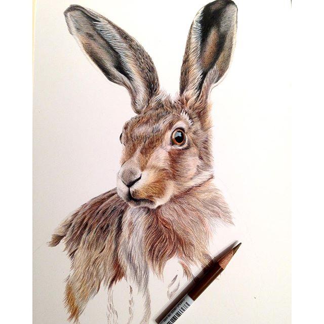 640x640 Mr Hare