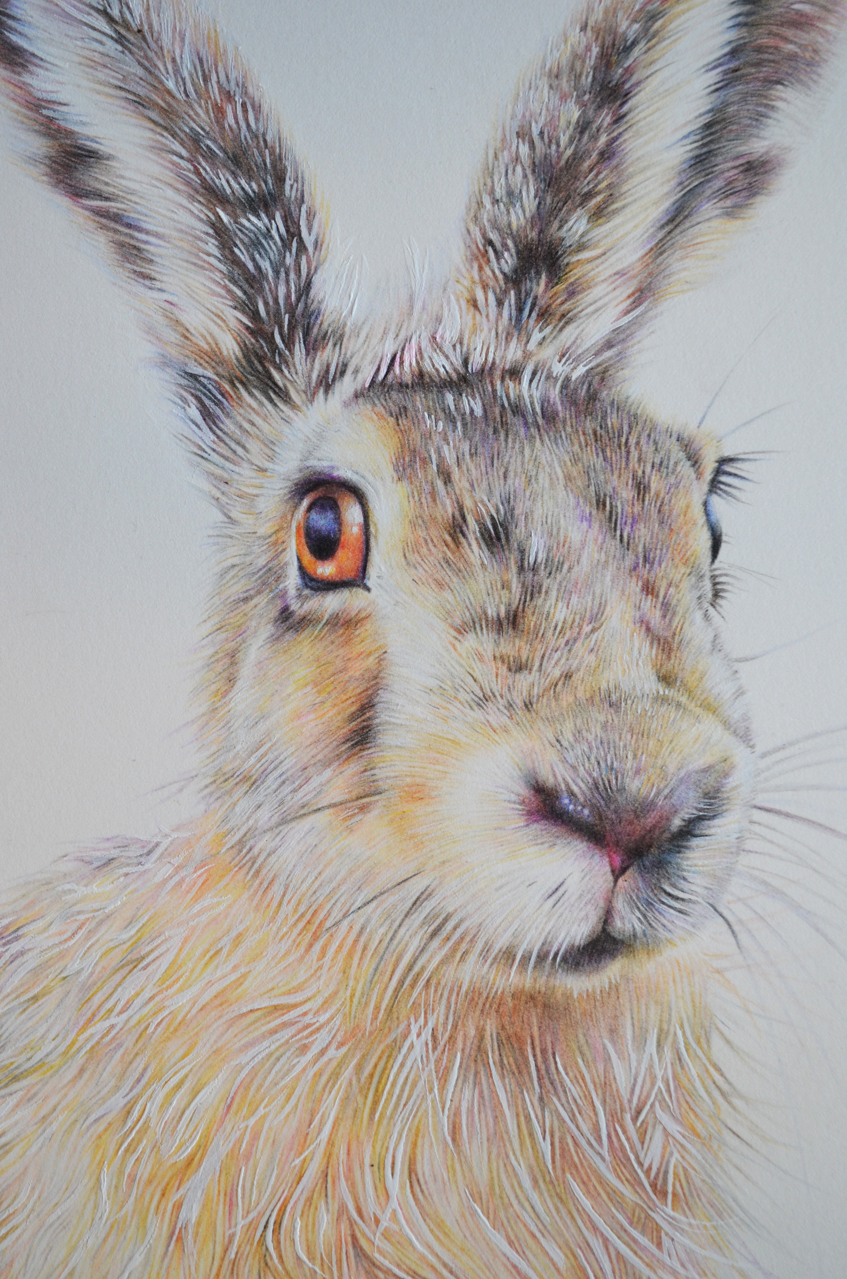 3264x4928 Original March Hare Drawing 24cm X 32cm Erin Buckley Coloured