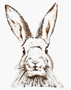 237x300 Vintage Print Poster Rabbit Hare Large Art Drawing For Glass Frame