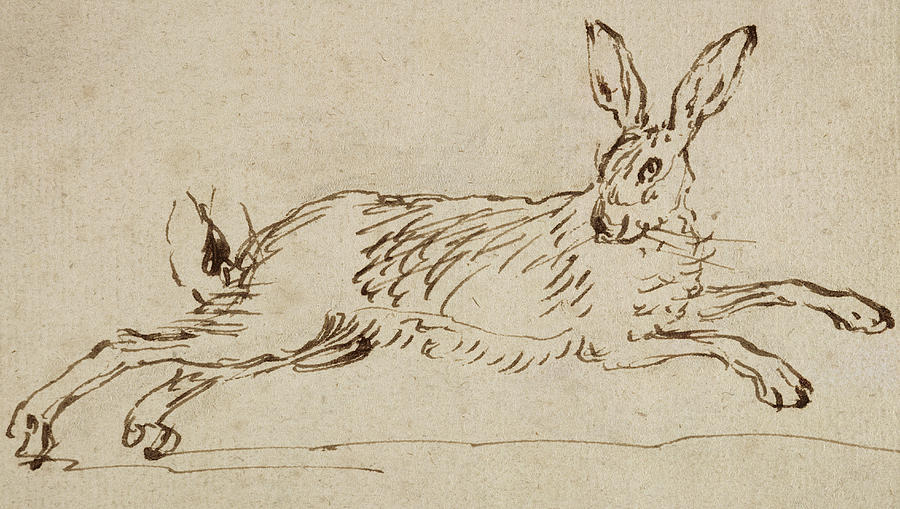 900x509 A Hare Running, With Ears Pricked Drawing By James Seymour