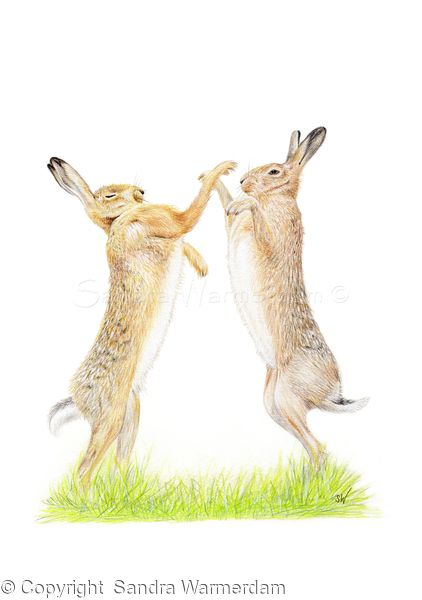 422x600 Boxing Hares Drawing