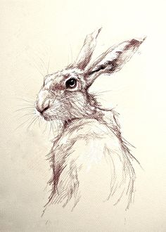 236x330 Hare Sketch. Rabbits And Hares