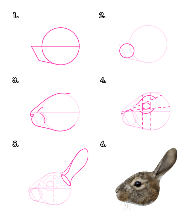 600x690 How To Draw Animals Hares And Rabbits