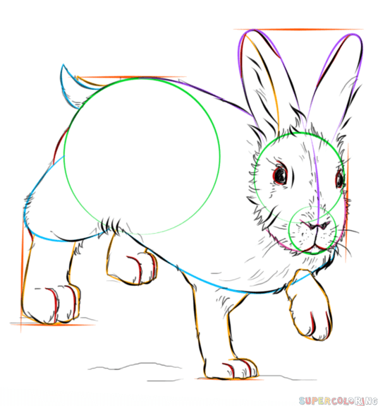 536x575 How To Draw A Showshoe Hare Step By Step Drawing Tutorials