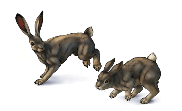 600x369 How To Draw Hares And Rabbits By Monikazagrobelna