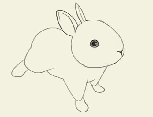 500x383 How To Draw Jackrabbits
