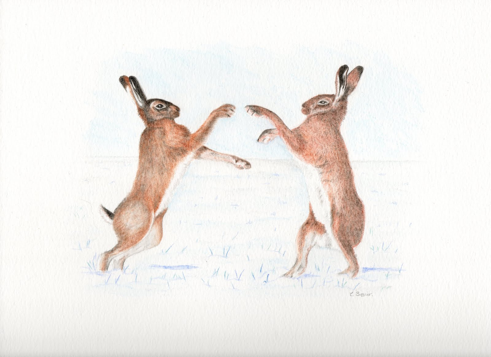 1600x1163 Pencil Drawings Wiltshire's Boxing Hares