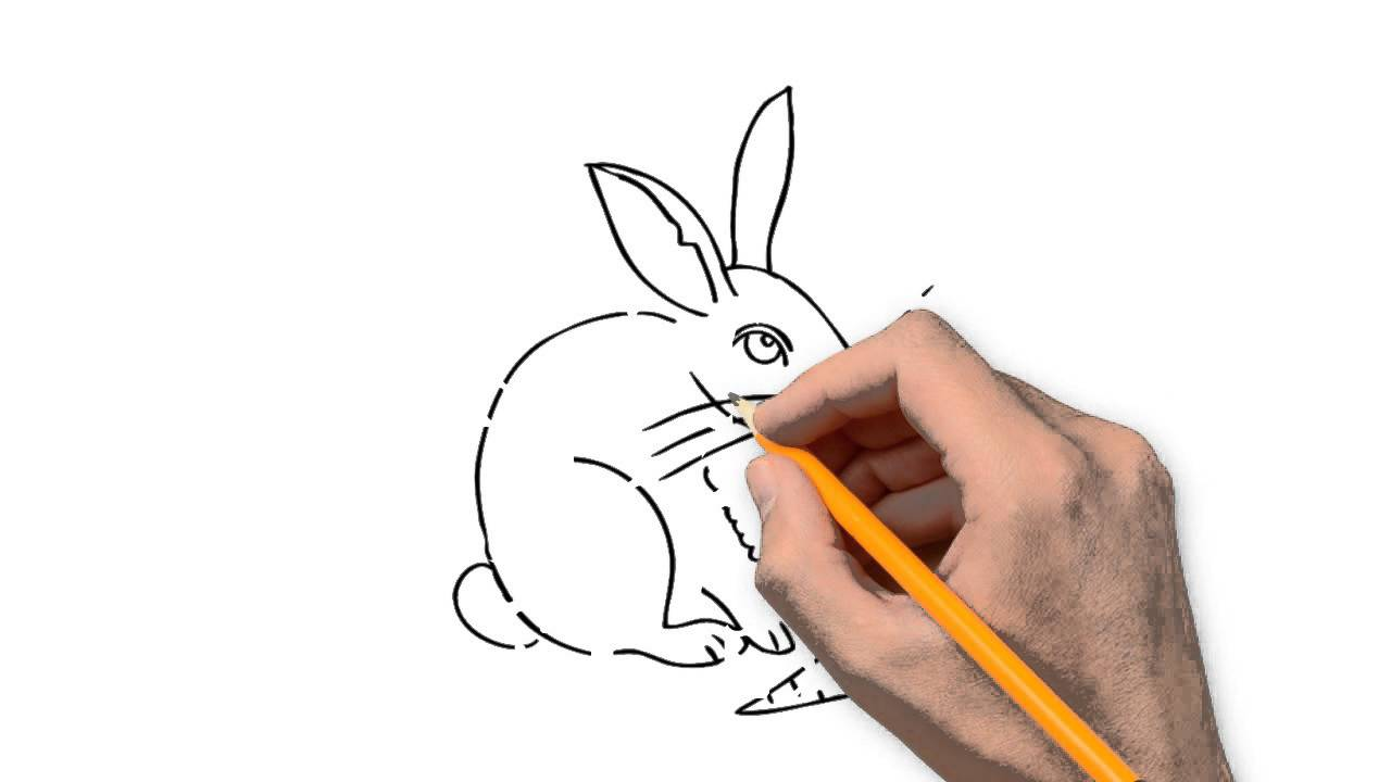1280x720 Hare Animals Pencil To Draw Step By Step