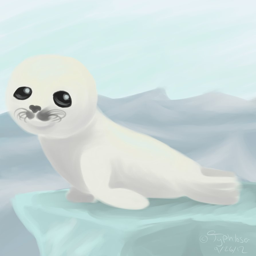 894x894 Baby Harp Seal By Typhloser
