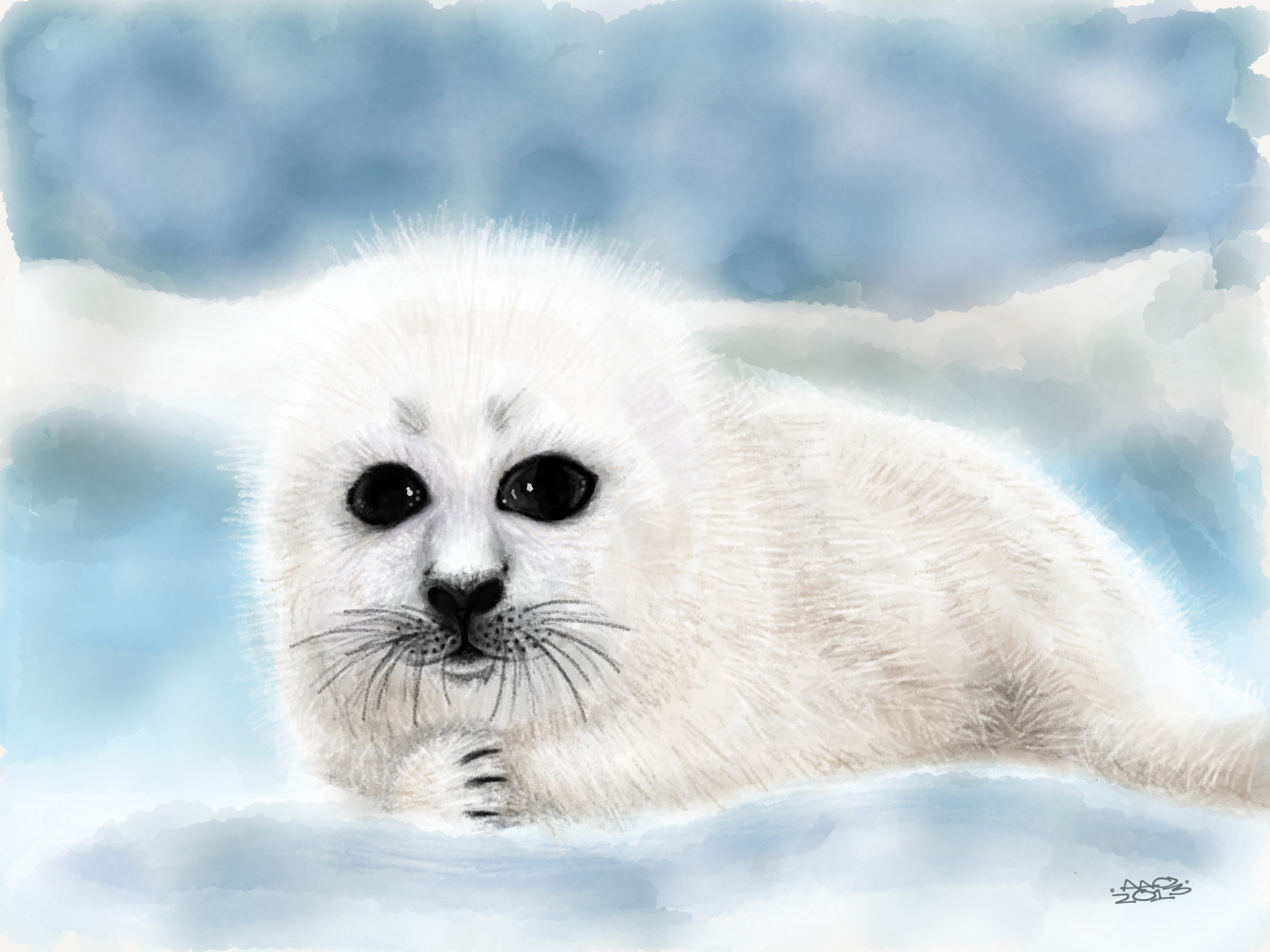 2048x1536 Cute Harp Seal Pups This Is A Drawing Of A Harp Seal Pup. Seals