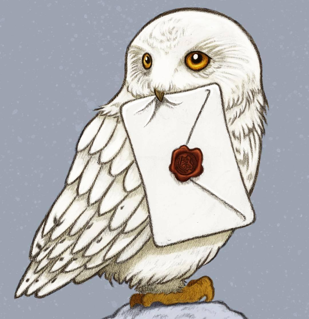 Harry Potter Hedwig Drawing At GetDrawings.com | Free For Personal Use Harry Potter Hedwig ...