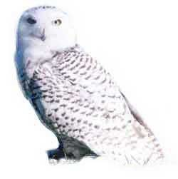 250x251 Don'T Forget About Hedwig. Do It Photo Reference