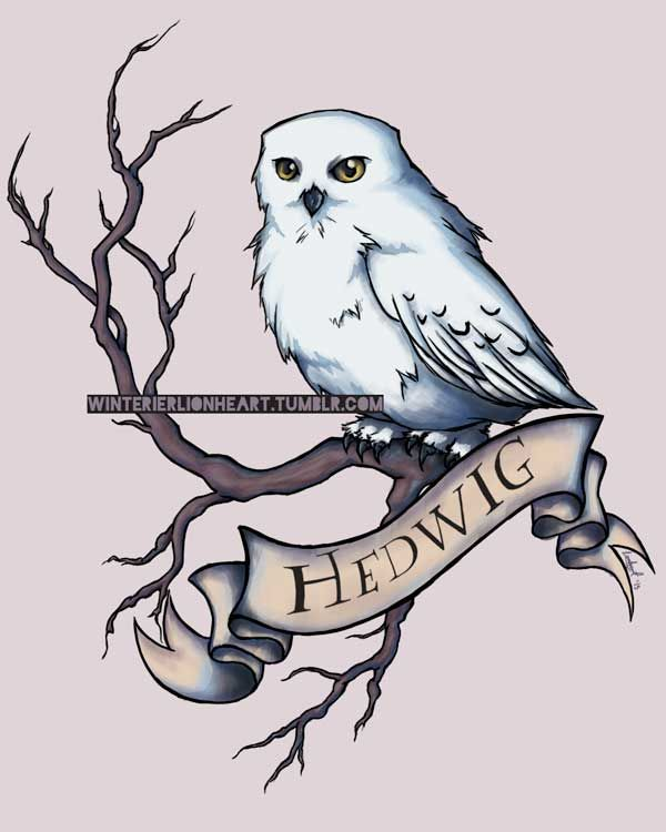600x750 Hedwig By Whiteappleartist On ~hp Owl Post