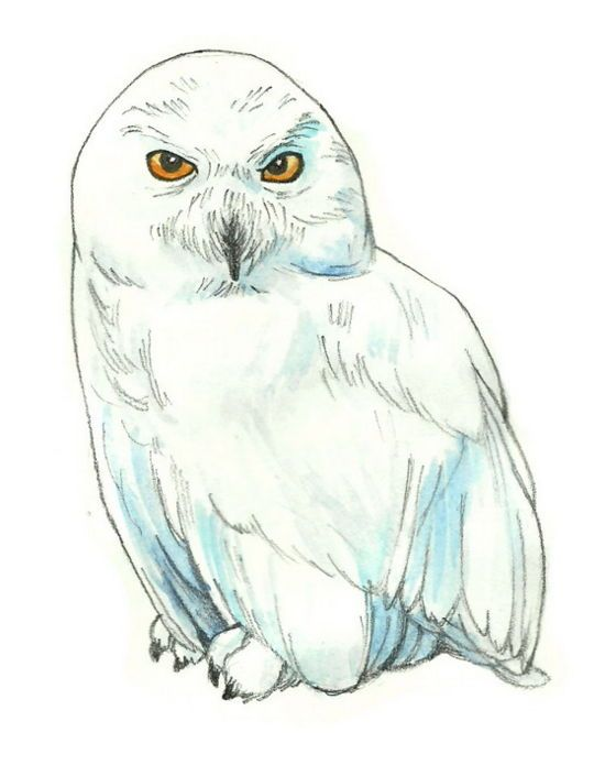 550x695 How To Draw Hedwig From Harry Potter 6 Steps (With Pictures