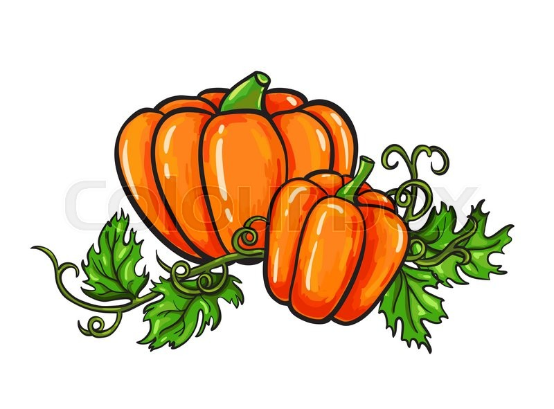800x591 Pumpkin Vector Drawing. Isolated Cartoon Vegetable With Leaves