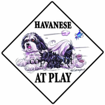 350x350 Havanese At Play2.jpg