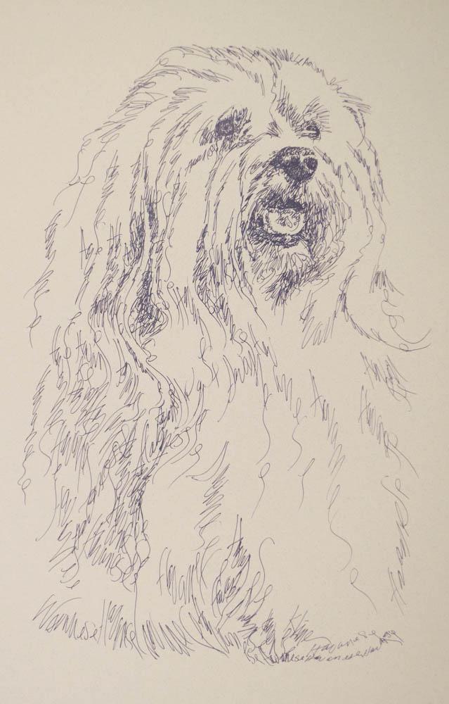 639x1000 Havanese Dog Art Portrait By Stephen Kline