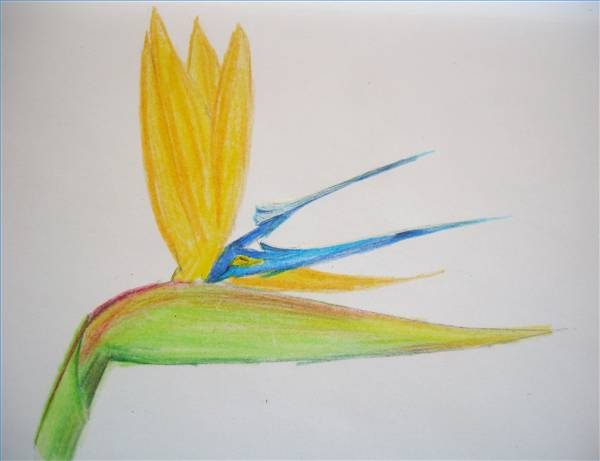 600x461 How To Draw Hawaiian Flowers Step By Step Ehow