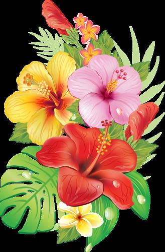 329x500 Tropical Hibiscus
