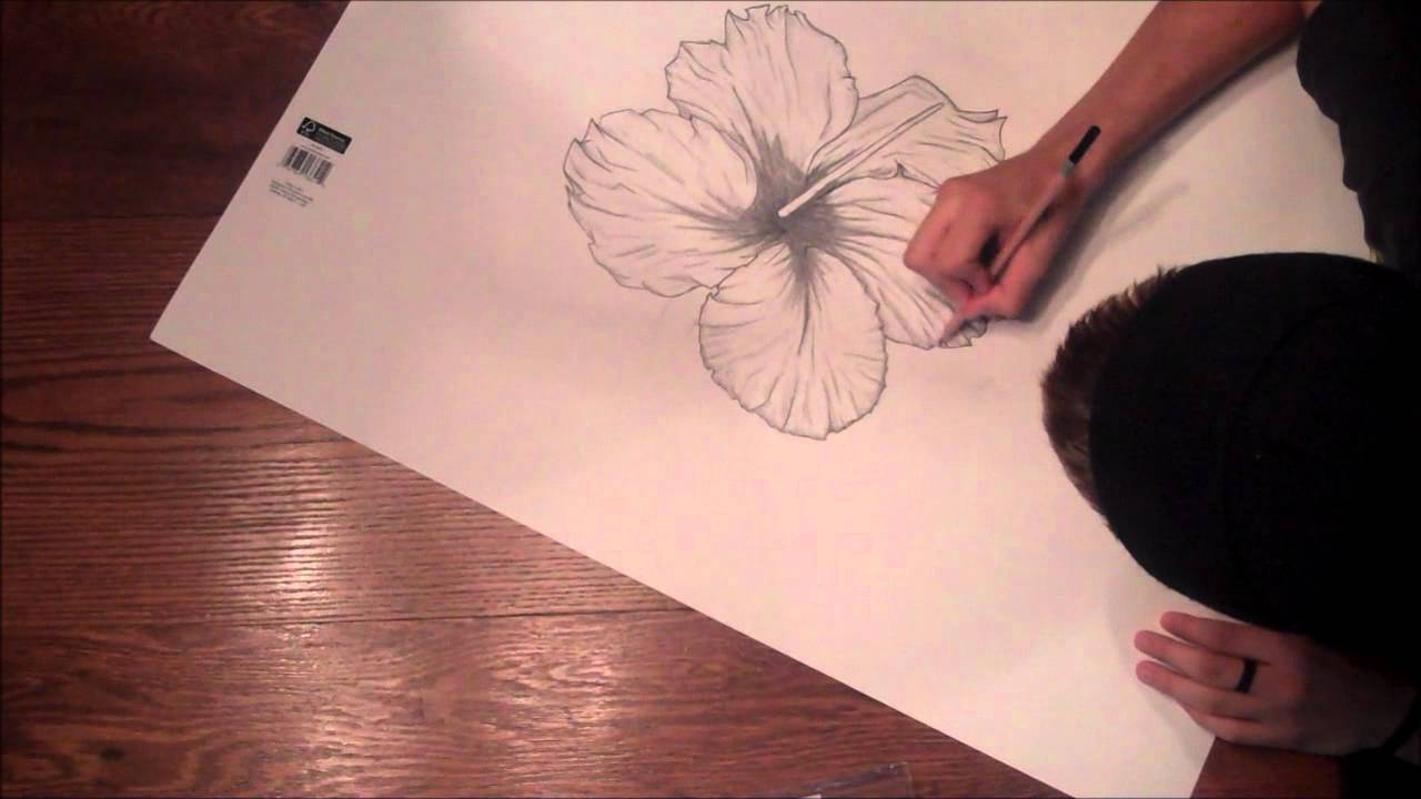 1280x720 The Hibiscus Flower A Drawing