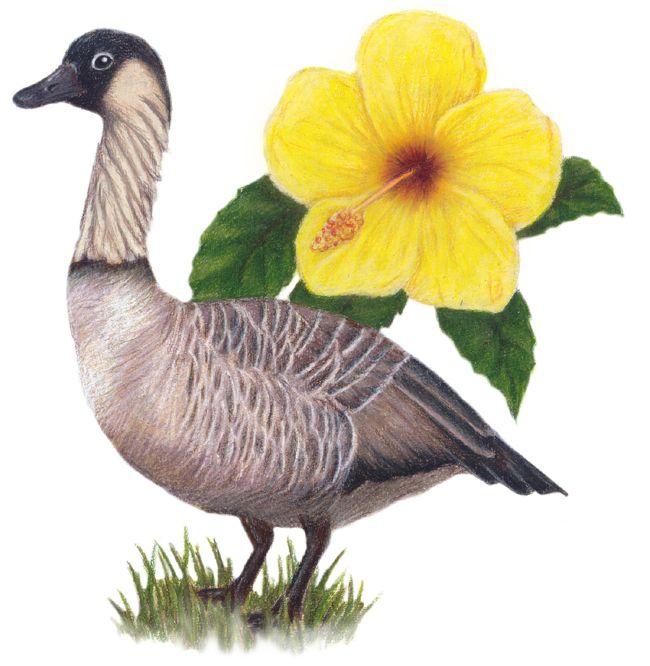 650x666 Hawaii State Bird And Flower, Nene, Yellow Hibiscus Hawai`i