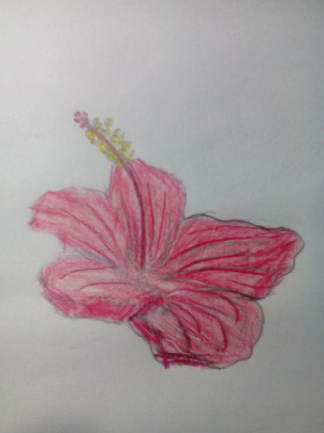 670x893 2 Easy Ways To Draw A Cartoon Hibiscus Flower