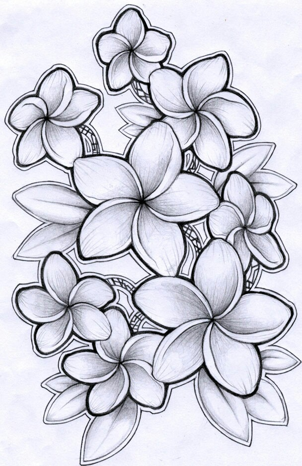 608x937 Pictures Hawaiian Flowers Drawing,